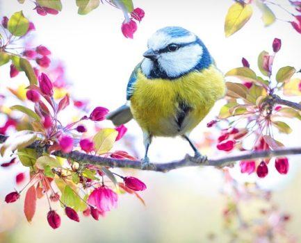 Aurinkoista kevättä!